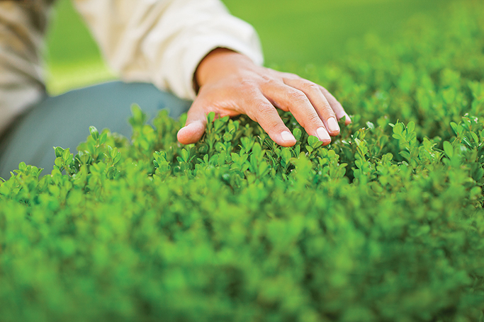 close up image of TruGreen Canada lawn